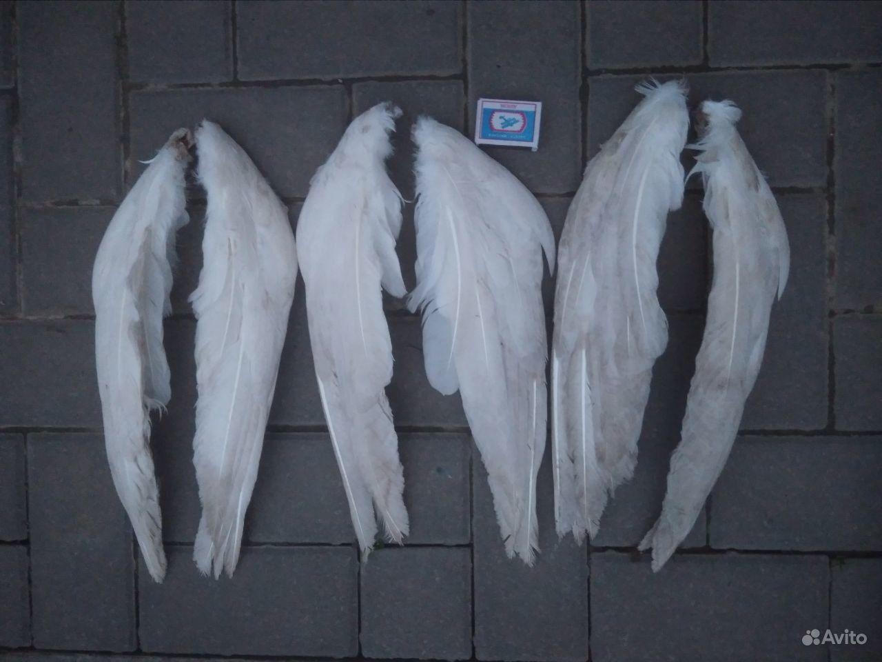 Крылья гусинные в Краснодаре - фотография № 3