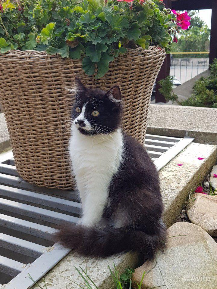 Отдам котёнка в добрые ручки - фотография № 2