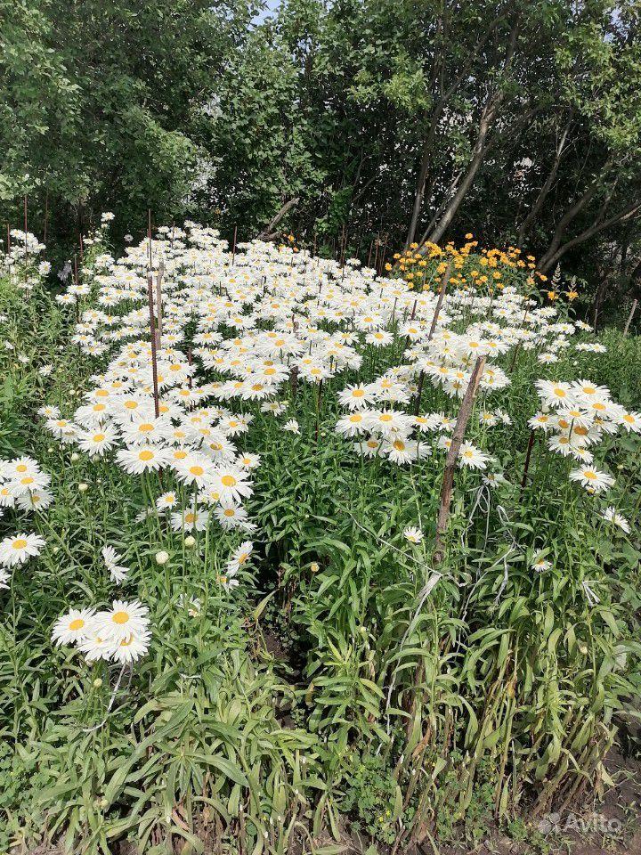 Растения купить на Зозу.ру - фотография № 7