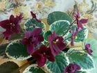 Цветы спб проспект ветеранов