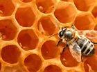Улей с пчелелами + магазин