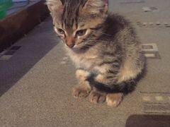 Кот(мальчик)