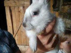 Продаю кроликов и кролов