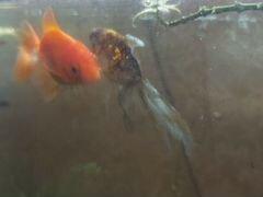 Аквариумные рыбки+растения+коряги