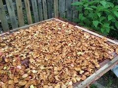 Яблоки сушоные