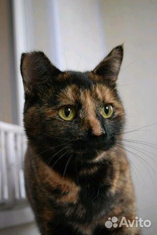 Кошка с отмороженным ушком