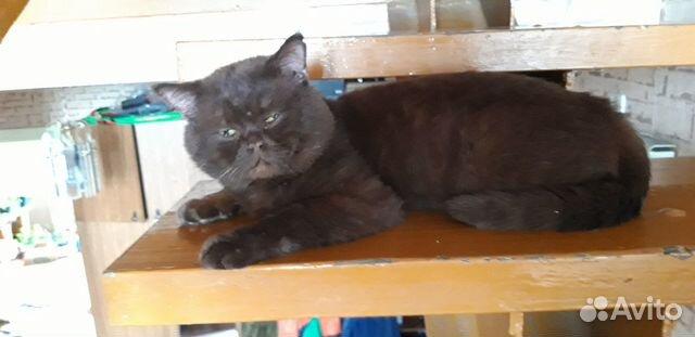 Британские котята 89234897013 купить 1