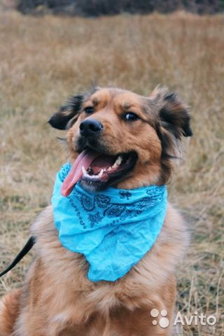 Собака из приюта в дар купить на Зозу.ру - фотография № 1
