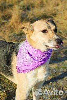 Необыкновенная собака в дар купить на Зозу.ру - фотография № 5