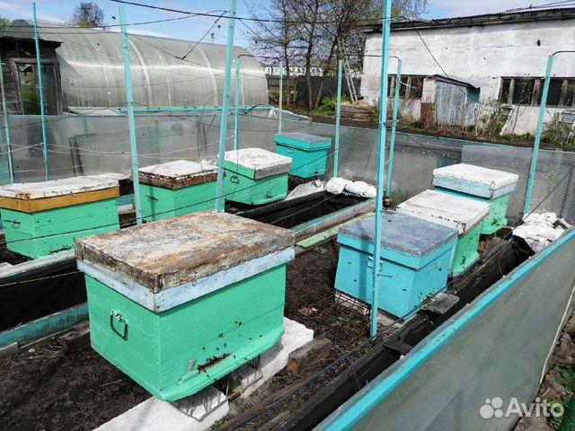 Пасека, ульи, пчелы (9 семей) 89220008190 купить 1