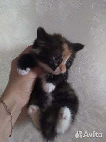Подарю котят  купить 1