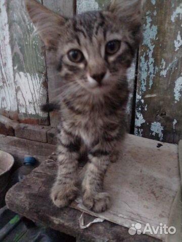 Котенок девочка  89397109841 купить 8