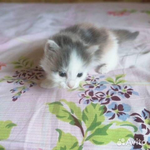 Кошка  89148760418 купить 5