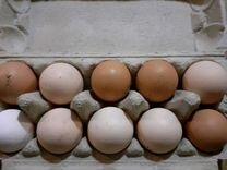 Яйцо куриное и перепелиное