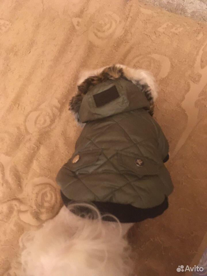 Куртка для собаки petsoo  89191738672 купить 3