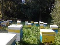 Продаётся мёд с личной пасеки