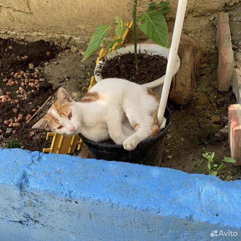 Котик чудесный