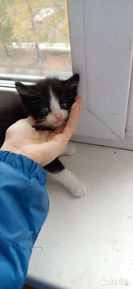 Кошка  89059831610 купить 2