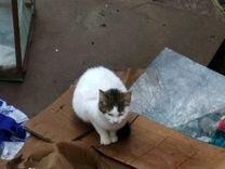 Кот кошка котята им нужен дом и лечение