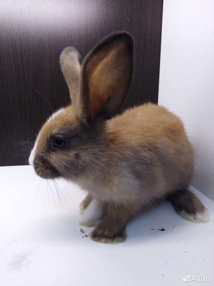 Крольчата  89676032072 купить 1