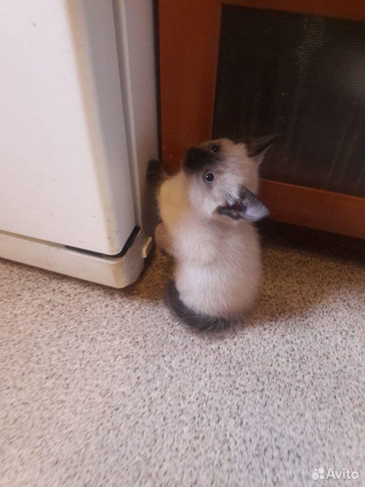 Продам самых лучших, добрых сиамских котят
