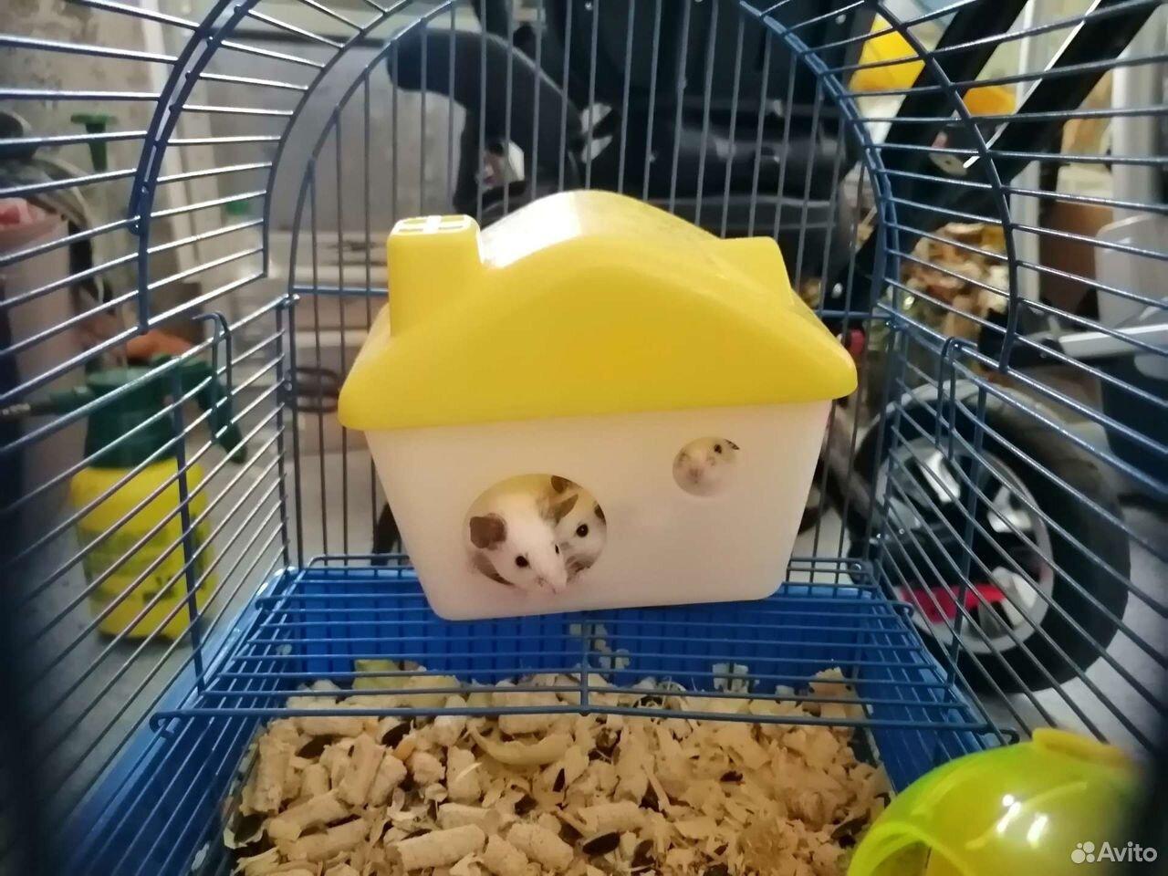 Японские мышки  89807466895 купить 3