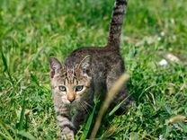 Котёнок Кроки в добрые руки — Кошки в Геленджике
