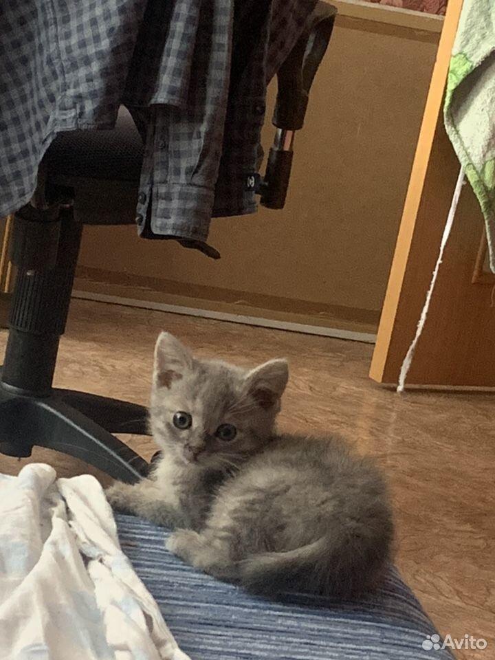 Кошка  89178177369 купить 1