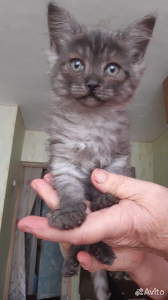 Кошки  89888508420 купить 1