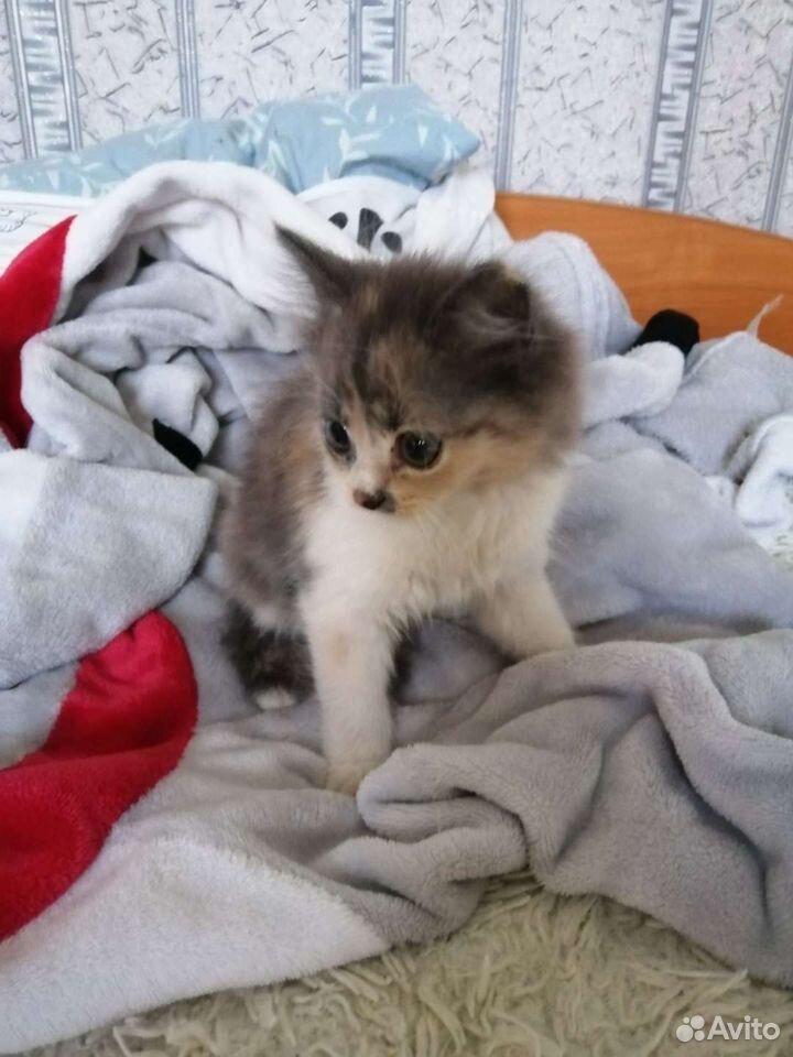 Кому котеночка